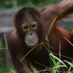 Indonesia: Volunteer project st Samboja Lestari