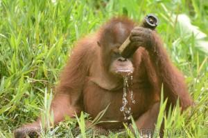 Little guy's having a drink